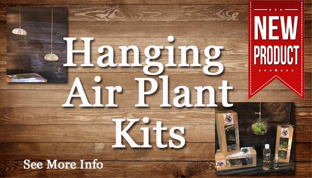 Air-plants