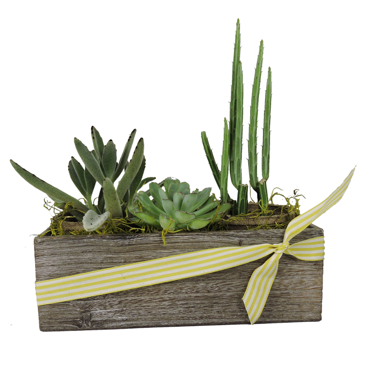 Long Succulent Box