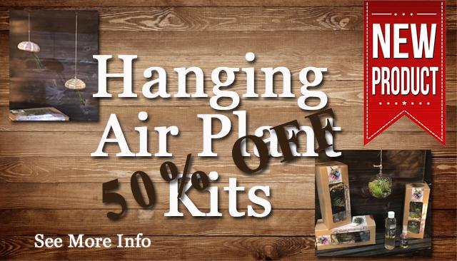 Air-plants2