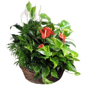 125 planter