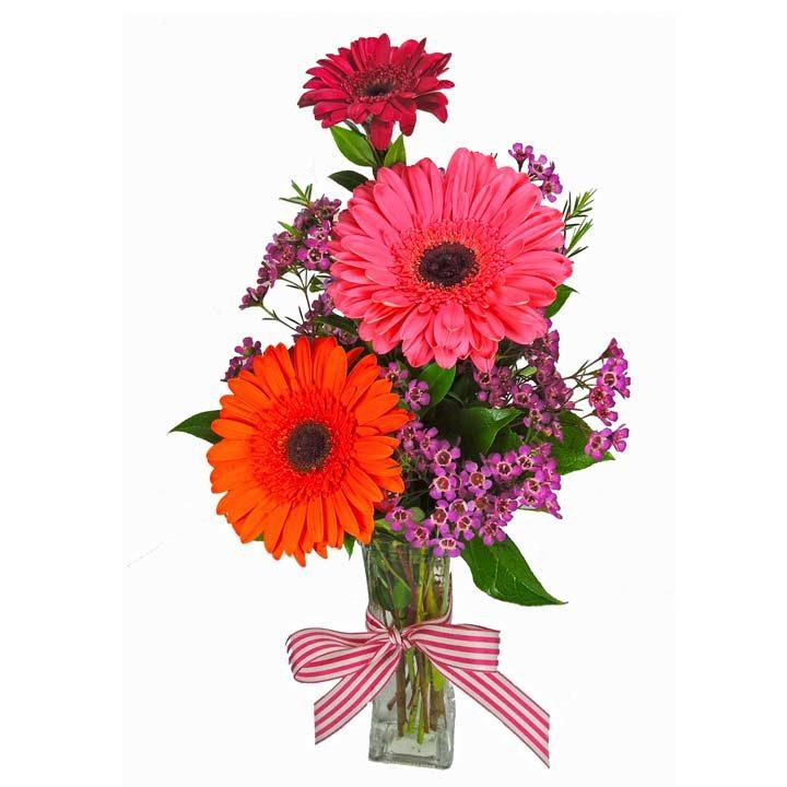 225 & Sunshine \u0026 Gerberas Bright Colored Gerberas in a Vase
