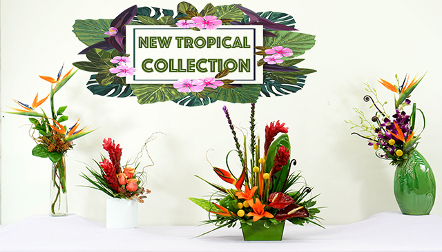 Tropical_cover