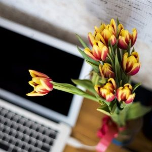 flowers-871685_640
