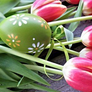 tulips-4103299_640